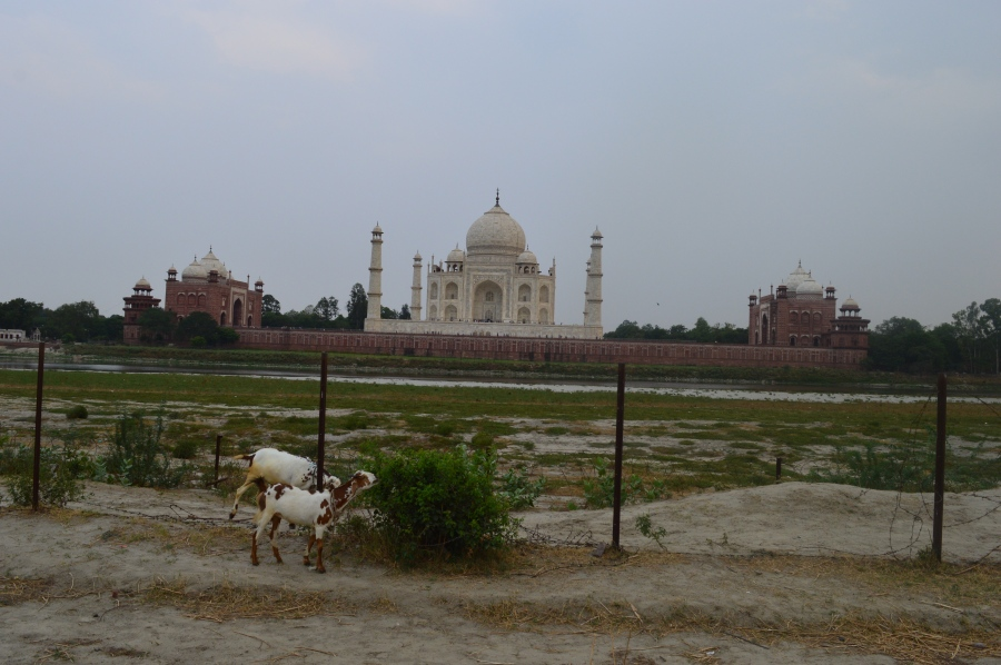 The Taj Mahal from Mehtab Bagh